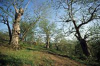 Alberi e boschi. Trees and forests.......