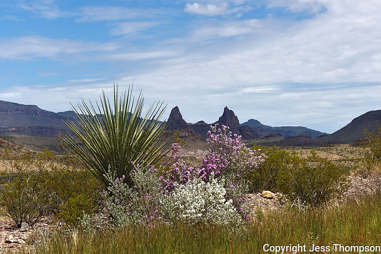 Big Bend scenic view