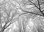 Riverside Park Trees in Winter