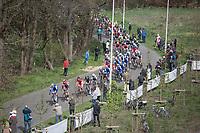 Peloton on the Broekstraat Cobbles<br /> <br /> 105th Scheldeprijs 2017 (1.HC)<br /> 1day race: Mol > Schoten 200km