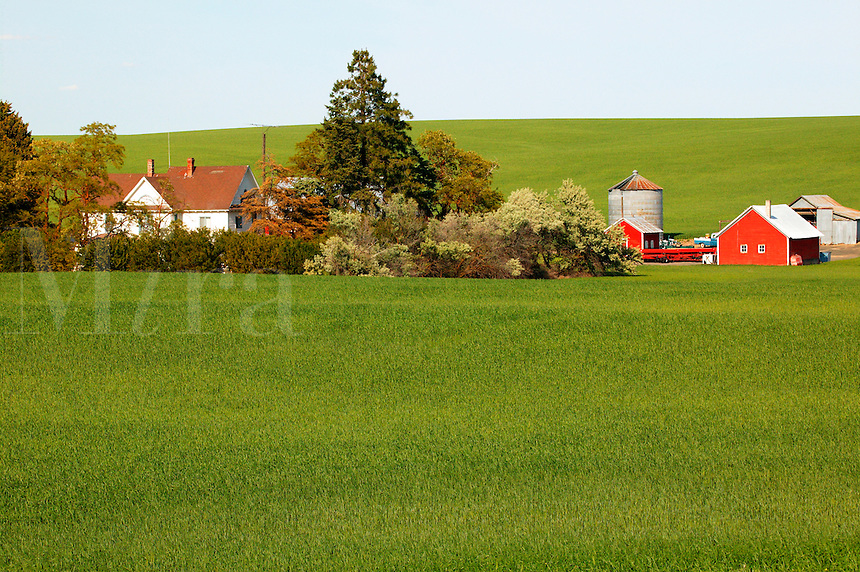 A barn and other buildings on farmland near Ritzville, Eastern Washington
