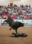 January 2009: Bullrider Jarrod Craig rides Maverick at the CBR World Championships in Las Vegas