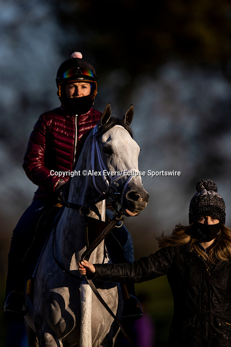 November 3, 2020: Valiance, trained by trainer Todd A. Pletcher, exercises in preparation for the Breeders' Cup Distaff at  Keeneland Racetrack in Lexington, Kentucky on November 3, 2020. Alex Evers/Eclipse Sportswire/Breeders Cup
