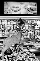 Switzerland. Canton Schwyz. Schwyz. Coop supermarket. A stuffed deer stands in the middle of the meat department. On the wall, an advertisement to sell fresh shrimps and fish. Coop, a Swiss cooperative, is the second largest retailer in Switzerland.30.08.13 © 2013 Didier Ruef