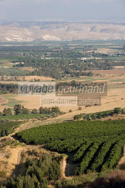 Asie/Israël/Galilée/Tibériade: Plantations d'oliviers d'un kibboutz prés du lac de Tibériade et en fond les monts du Golan