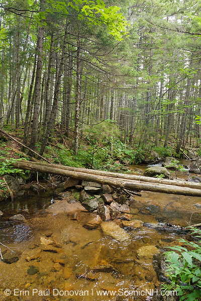 Log bridge at the Notch Brook crossing along the Nancy Pond Trail in the Pemigewasset Wilderness of the New Hampshire White Mountains. Parts of this trail utilizes the railroad bed of the old East Branch & Lincoln Railroad (1893-1948).