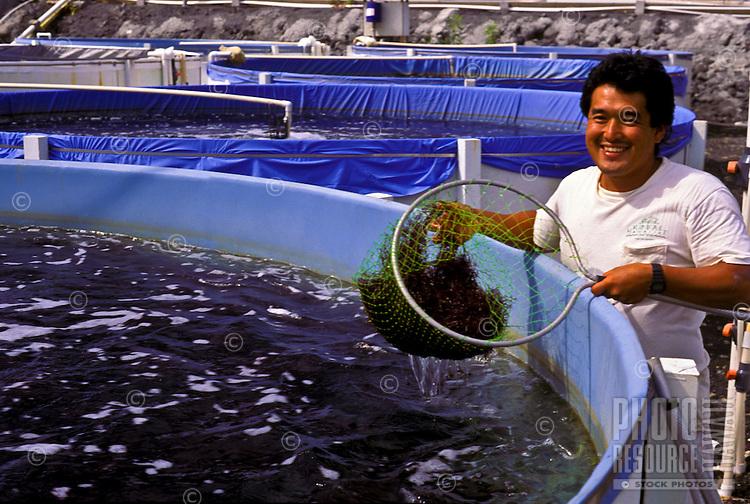 Limu (seaweed) grower; Keahole Point Natural Energy Laboratory, Kailua-Kona, Big Island of Hawaii.
