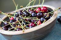 Vogelkirschen-Ernte, Wildkirschen-Ernte, Vogel-Kirsche, Vogelkirsche, Kirsche, Süß-Kirsche, Süss-Kirsche, Süsskirsche, Süßkirsche, Wildkirsche, Wild-Kirsche, Frucht, Früchte, Kirsche, Kirschen, Prunus avium, Gean, Mazzard, Wild Cherry, cherry, Le merisier, cerisier des oiseaux