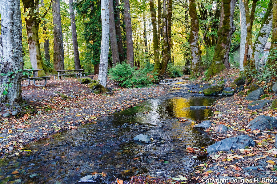 Little Mission Creek, and active salmon spawning creek, flows through Belfair State Park campground.  Near the city of Belfair, WA along Hood Canal.