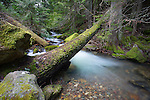 Idaho, North, Kootenai County, Coeur d'Alene.. Beauty Creek in the Idaho Panhandle National Forest in spring.