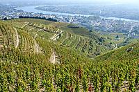 France, Drome, Tain l'Hermitage, AOC vineyard of the Rhone valley, view from the hill and Hermitage vineyard,  Saint Christophe chapel // France, Drôme (26), Tain-l'Hermitage, vignoble AOC de la vallée du Rhône, vue depuis la colline et le vignoble de l'Hermitage