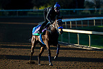 November 3, 2020: Donjah, trained by trainer Henk Grewe, exercises in preparation for the Breeders' Cup Turf at  Keeneland Racetrack in Lexington, Kentucky on November 3, 2020. Jon Durr/Eclipse Sportswire/Breeders Cup