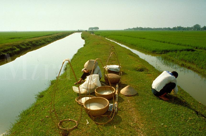 Vietnamese commune farm worker in rice fields in northern Vietnam. Vietnamese farm worker. Vietnam.