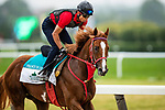 June 4, 2021:  France Go De Ena gallops in preparation for the Belmont Stakes at Belmont Park in Elmont, New York on June 4, 2021. Evers/Eclipse Sportswire/CSM