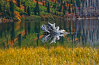 Clayton Lake in the Flathead National Forest in Fall