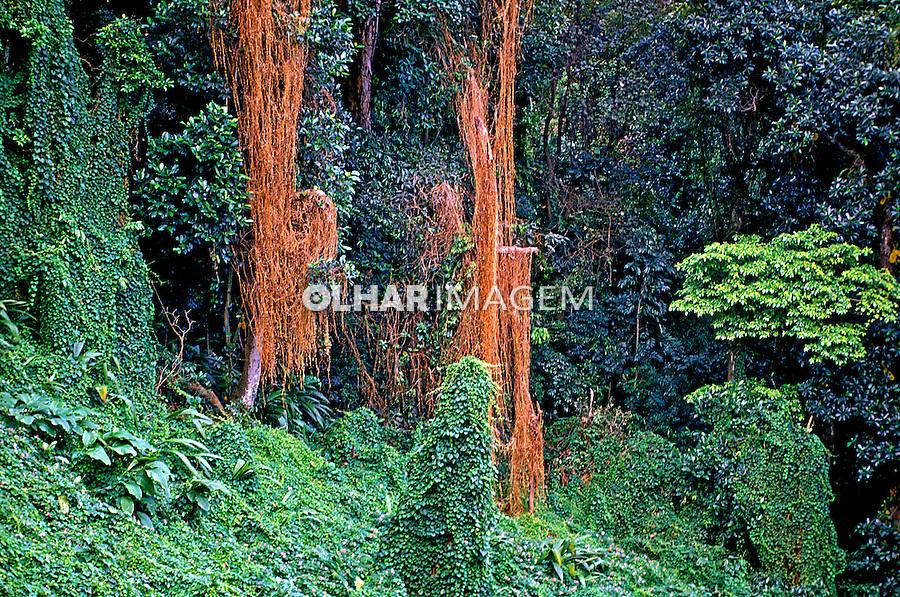 Parque Nacional da Tijuca. Rio de Janeiro. Foto de Luciana Whitaker.
