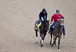 APRIL 30, 2015: Firing Line, trained by Simon Callaghan, exercises in preparation for the 141st Kentucky Oaks during morning workouts at Churchill Downs in Louisville, Kentucky. Ting Shen/ESW/Cal Sport Media