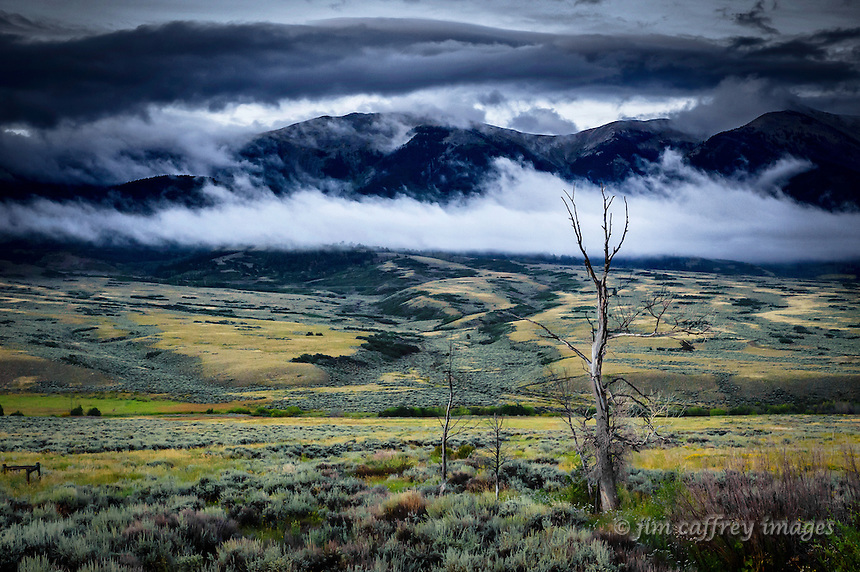 Dead trees in the northern end of the San Luis Valley and the Sangre de Cristo Mountains partially obscured by low hanging clouds.