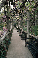 Wisteria arbor, The Huntington, San Marino, California, old climbing vine intertwined amid gorgeous big tree trunk posts and black wooden garden benches