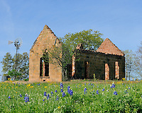Bluebonnets, windmill and old building, Hwy 71, North of Llano , Texas