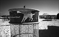 """Pink dog<br /> From """"The Other Wind"""" series<br /> Miami Beach, Jan 2011"""