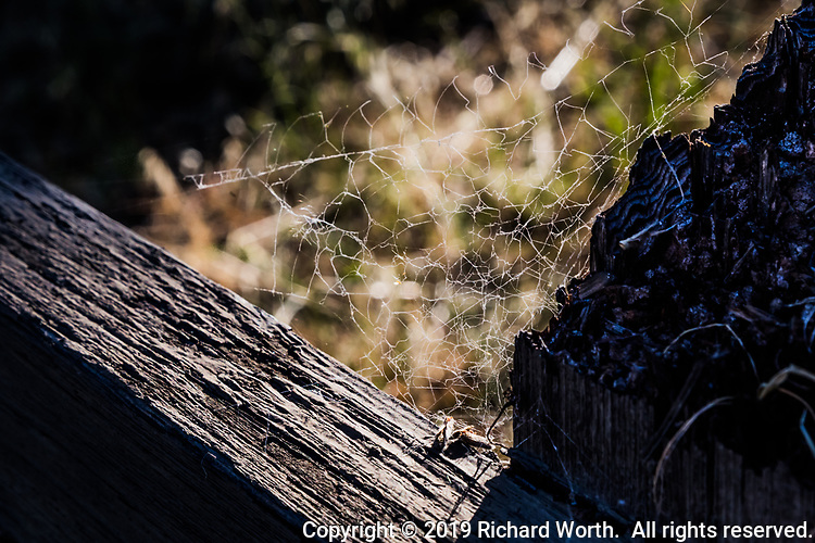 Intricate and tangled, a spider's web is tucked into the corner where a fence rail and post meet.