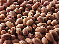 Fresh un-cooked Borlotti beans - stock photos