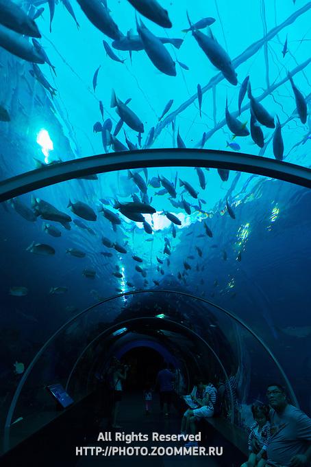 Glass tube walkway in S E A Aquarium on Sentosa island, Singapore
