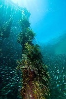 Jetty pylon at Aboratek Island, Raja Ampat, West Papua, Indonesia, seen from below the water, Pacific Ocean