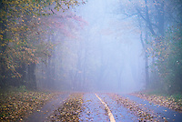 Misty New England country road, Massachusetts, USA