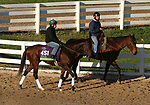 Casa Creed, trained by trainer William I. Mott, exercises in preparation for the Breeders' Cup Mile at Keeneland Racetrack in Lexington, Kentucky on November 3, 2020.