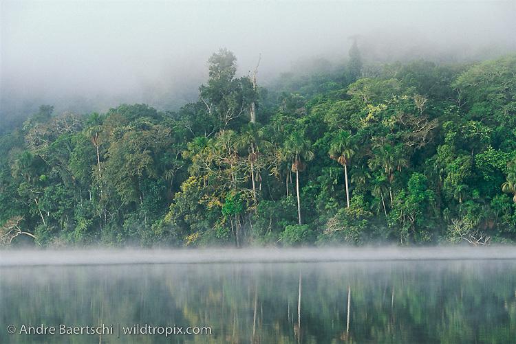 Lake Chalalan, lowland tropical rainforest, early morning, Madidi National Park, Bolivia.
