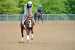 Baltimore, MD- May 16: Preakness contender Will Take Charge during the morning workouts at Pimlico Race Course in Baltimore, MD on 05/16/13. (Ryan Lasek/ Eclipse Sportswire)