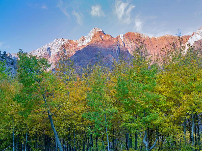 Fall colored aspen trees and Eastern sierra Nevada Mountains near McGee Cree, California