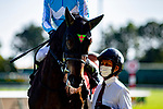 TOYOAKE,JAPAN-MAR 14: Daring Takt,ridden by Kohei Matsuyama,is post parading before the Kinko Sho at Chukyo Racecourse on March 14,2021 in Toyoake,Aichi,Japan. Kaz Ishida/Eclipse Sportswire/CSM