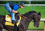 Take Charge Indy, trained by Patrick Byrne and to be ridden by Calvin Borel, works out in preparation for the 138th Kentucky Derby at Churchill Downs in Louisville, Kentucky on May 3, 2012