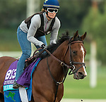ARCADIA, CA - NOV 01: Oscar Performance, owned by American Racing, LLC and trained by Brian A. Lynch, exercises in preparation for the Breeders' Cup Juvenile Turf at Santa Anita Park on November 1, 2016 in Arcadia, California. (Photo by Casey Phillips/Eclipse Sportswire/Breeders Cup)