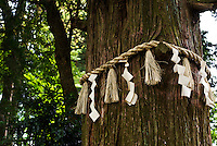 Shimenawa ropes and Shinto papers mark a holy tree on Mount Takao.