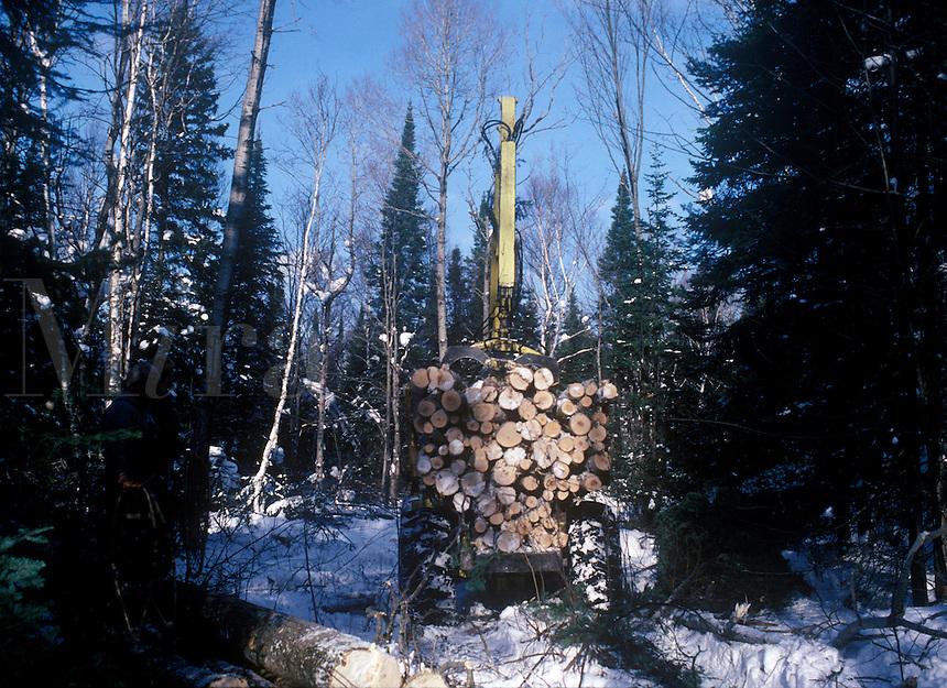 Harvest load of fresh cut trees in Michigan