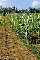 Weinberge bei Großwallstadt,  fränkischer Rotweinwanderweg  in Unterfranken, Bayern, Deutschland
