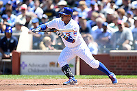 Chicago Cubs third baseman Luis Valbuena (24) squares to bunt during a game against the Milwaukee Brewers on August 14, 2014 at Wrigley Field in Chicago, Illinois.  Milwaukee defeated Chicago 6-2.  (Mike Janes/Four Seam Images)