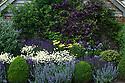 Mixed herbaceous border containing Anthemis tinctoria 'E.C. Buxton', Salvia nemorosa 'Ostfriesland', Nepeta,  Achillea, Clematis viticella 'Étoile Violette', Buddleia and clipped Box balls, Town Place, late June.