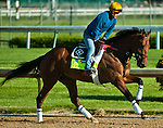April 28, 2015: Keen Ice, trained by Dale Romans, exercises in preparation for the 141st Kentucky Derby at Churchill Downs in Louisville, Kentucky. John Voorhees/ESW/CSM