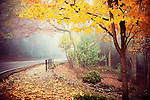 A road leading to Monte Sano State Park in Huntsville, Alabama.  A foggy autumn morning provides warmer tones and foggy weather provides a softness.