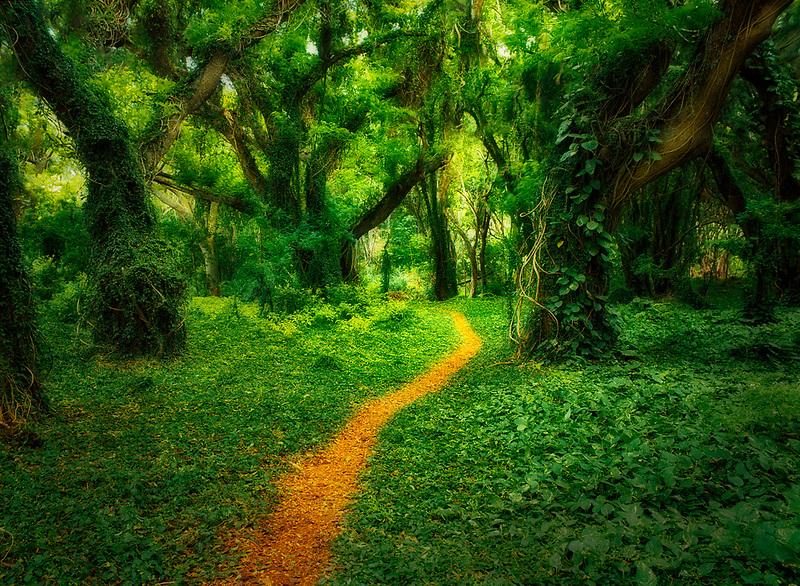 Trail through rainforest. Maui, Hawaii.