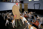 'DUKE OF BEAUFORT HUNT', CHARLES WHEELER FEEDS THE HOUNDS AFTER A MORNING'S HUNTING