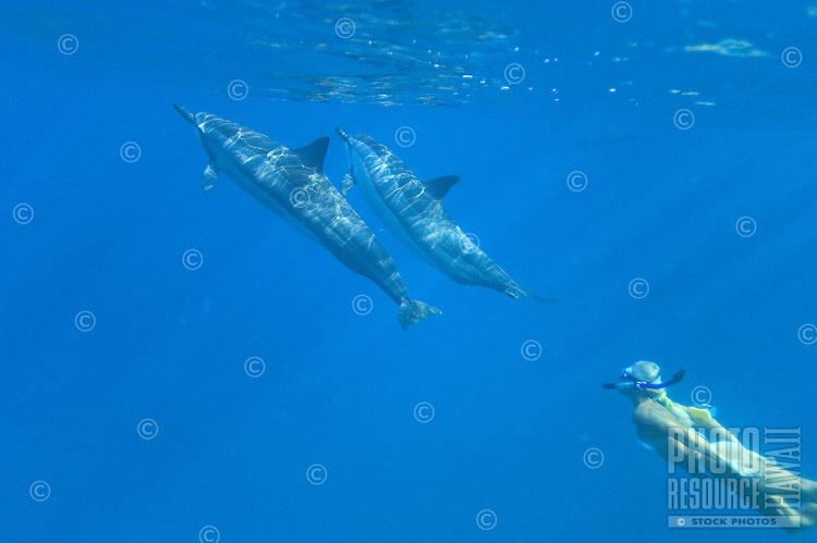 Snorkeler with Hawaiian Spinner Dolphins; Stenella Longirostris