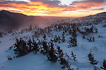 Sunrise color from the krummholz near treeline, winter, Rocky Mountain National Park; blowing snow, February 2008, Colorado, USA, Rocky Mountains