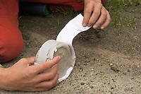 Kinder gießen Tierspur aus Gips, Junge entfernt Karton vom Gips mit dem Trittsiegel, der Fußspur von einem Reh