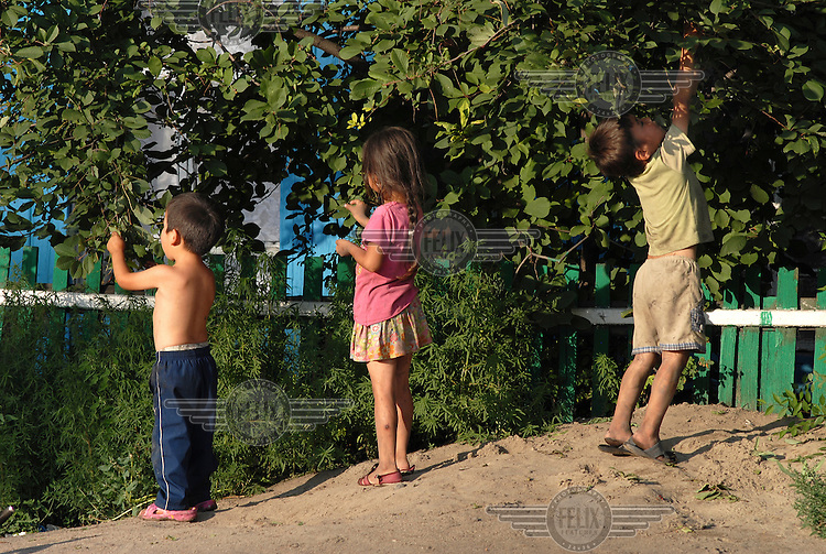 Children pick fruit in the centre of Kyzyl.